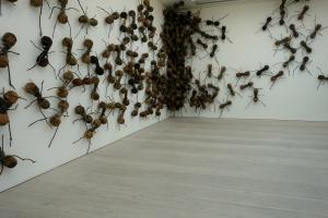 eat_wear_wander_ants