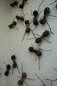 eat_wear_wander_ants4