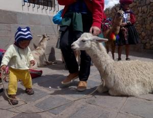 eat_wear_wander_baby&llama