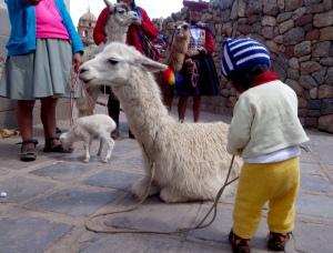 eat_wear_wander_baby&llama2