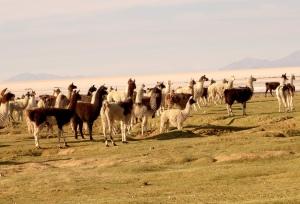 eat_wear_wander_llamas