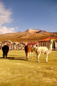 eat_wear_wander_llamas2