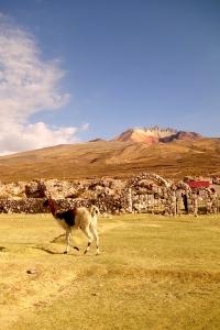 eat_wear_wander_llamas4