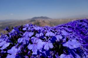 eat_wear_wander_purpleflowers