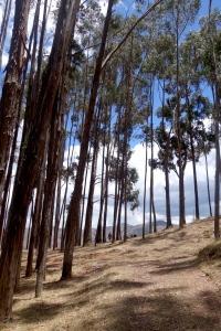 eat_wear_wander_trees2