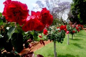 eat_wear_wander_roses